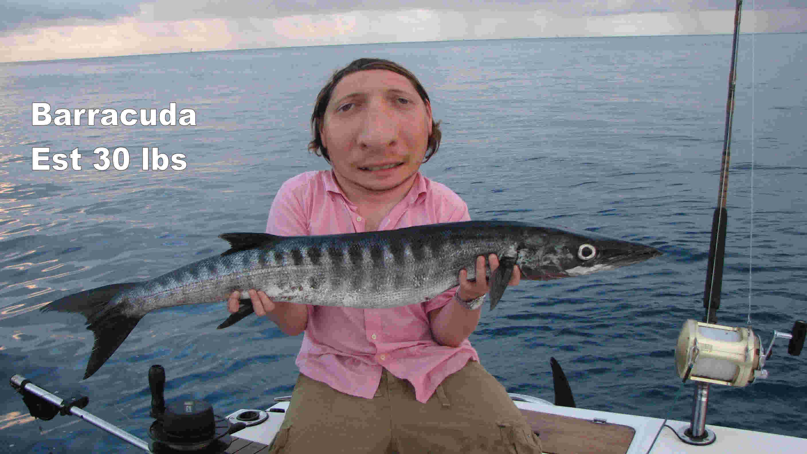 Image gallery largest barracuda ever caught for The big fish